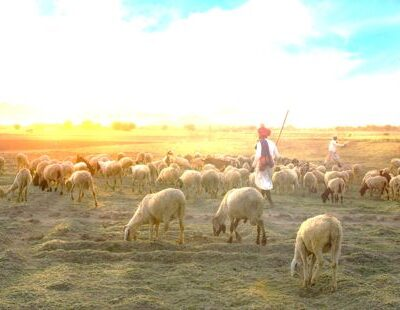 Parable of the Lost Sheep Meaning and 3 Lessons about God's love
